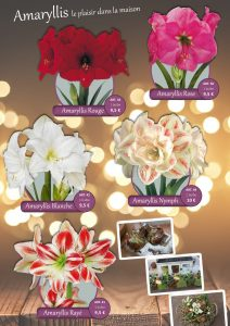 amaryllis catalogue